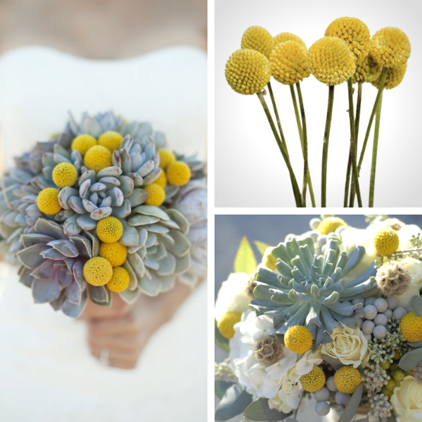Bouquet Sposa con craspedia
