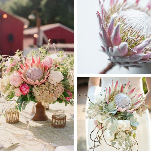 Bouquet per sposa con protea
